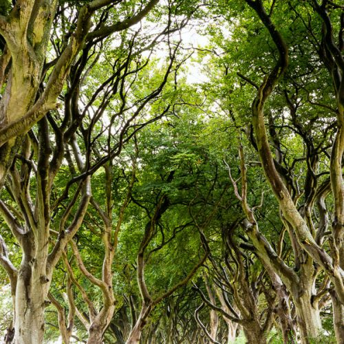 Michael Gissane Photography Dublin Based Photographer Mystical Dark Hedges 2