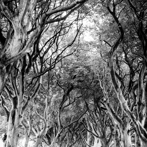 Michael Gissane Photography Dublin Photography Dark Hedges
