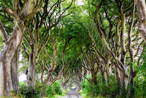 Michael Gissane Photography Dublin Photography Mystical Dark Hedges